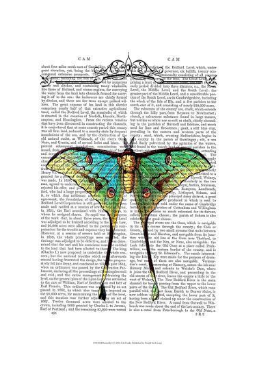 Butterfly 1-Fab Funky-Art Print