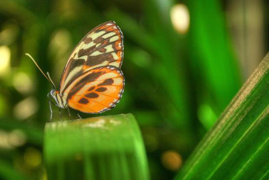Butterfly 1-Robert Goldwitz-Photographic Print