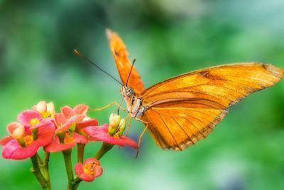 Butterfly 2-Steven Maxx-Photographic Print