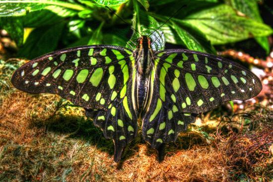 Butterfly 3-Robert Goldwitz-Photographic Print