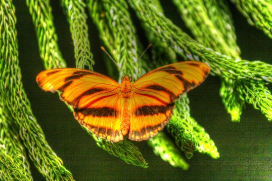 Butterfly 4-Robert Goldwitz-Photographic Print