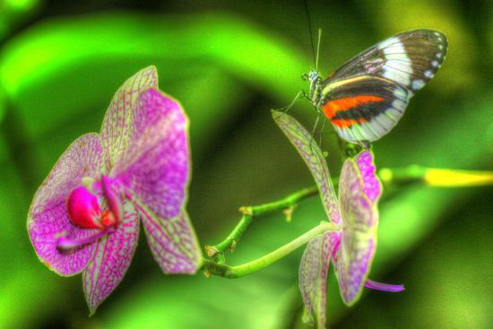Butterfly 7-Robert Goldwitz-Photographic Print