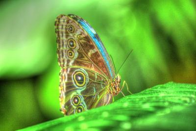 Butterfly 9-Robert Goldwitz-Photographic Print