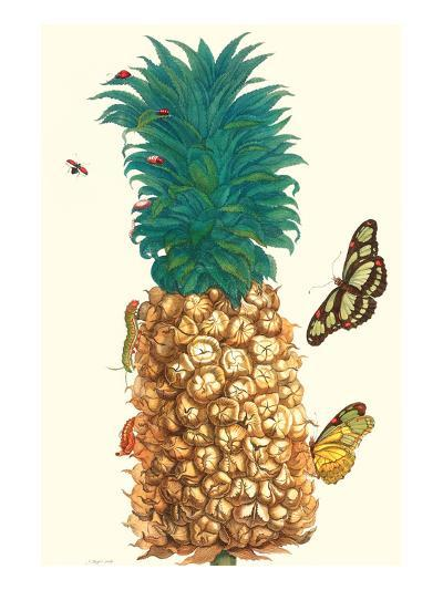 Butterfly and Beetle on a Pineapple-Maria Sibylla Merian-Premium Giclee Print