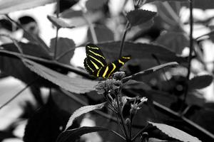 Butterfly at Bronx Zoo