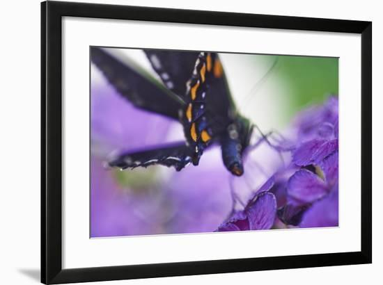 Butterfly AZ 9-Chris Dunker-Framed Photographic Print