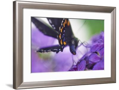 Butterfly AZ 9-Chris Dunker-Framed Photographic Print