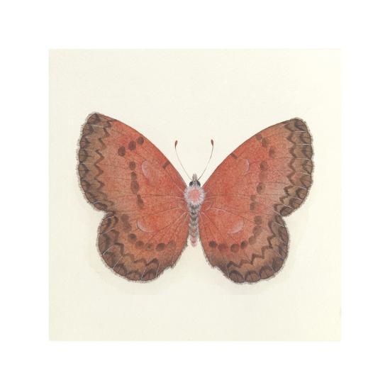Butterfly I-Sophie Golaz-Premium Giclee Print