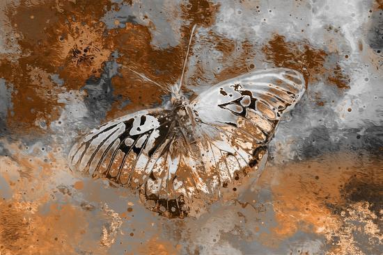Butterfly II-Fernando Palma-Giclee Print