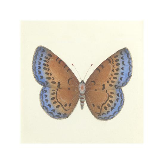 Butterfly III-Sophie Golaz-Premium Giclee Print