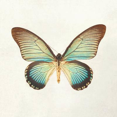 Butterfly Impression II-Irene Suchocki-Giclee Print