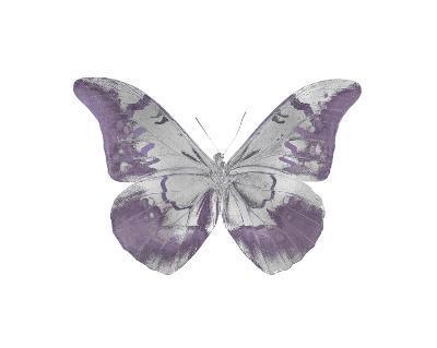 Butterfly in Amethyst I-Julia Bosco-Giclee Print