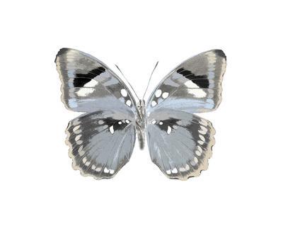 https://imgc.artprintimages.com/img/print/butterfly-in-grey-i_u-l-f8nsdv0.jpg?p=0