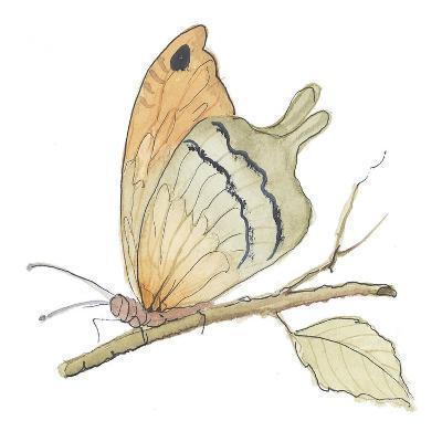 Butterfly in Orange-Peggy Abrams-Art Print