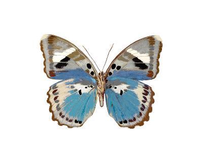 Butterfly in Pink I-Julia Bosco-Giclee Print
