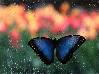 Butterfly in the White River Gardens, Indianapolis, Indiana, USA-Anna Miller-Photographic Print