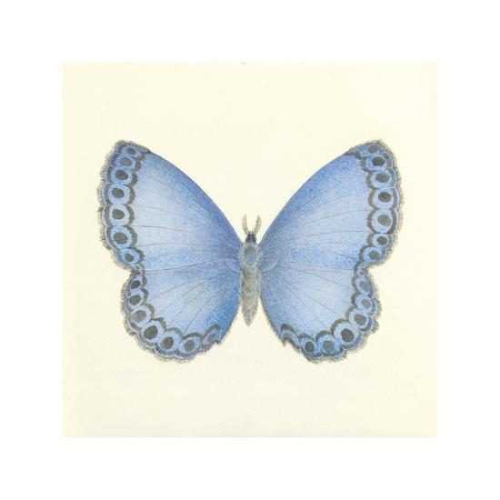 Butterfly IV-Sophie Golaz-Premium Giclee Print