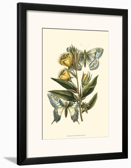 Butterfly Oasis II--Framed Art Print