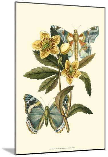Butterfly Oasis III--Mounted Print