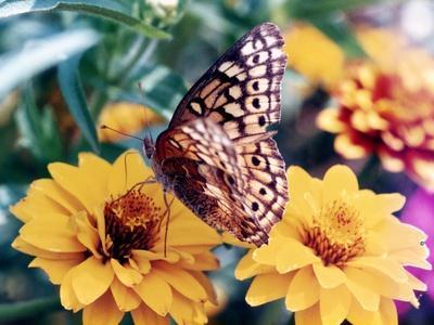 https://imgc.artprintimages.com/img/print/butterfly-on-flower_u-l-q1csg330.jpg?p=0