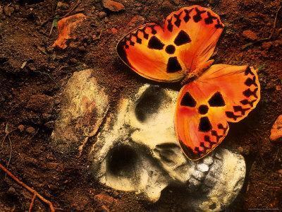 https://imgc.artprintimages.com/img/print/butterfly-on-skull_u-l-p4vhr20.jpg?p=0