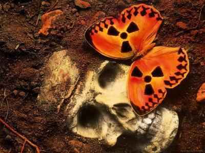 https://imgc.artprintimages.com/img/print/butterfly-on-skull_u-l-p4vhr80.jpg?p=0