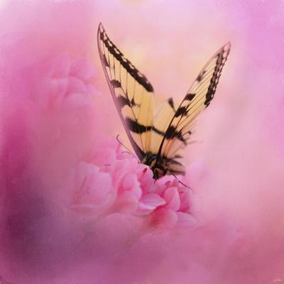 Butterfly on the Azaleas-Jai Johnson-Giclee Print