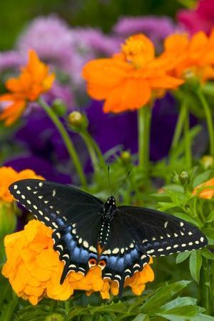 https://imgc.artprintimages.com/img/print/butterfly-on-yellow-flowers_u-l-pznsgj0.jpg?p=0