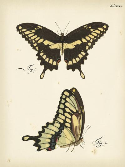 Butterfly Profile I-Vision Studio-Art Print