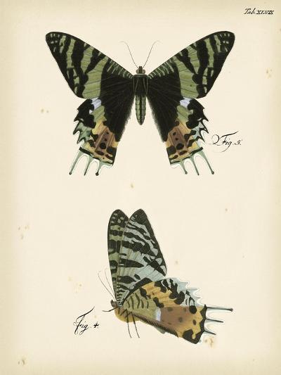 Butterfly Profile IV-Vision Studio-Art Print