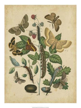 https://imgc.artprintimages.com/img/print/butterfly-stages-ii_u-l-ph6nlk0.jpg?p=0