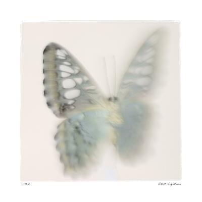 Butterfly Study 6-Claude Peschel Dutombe-Giclee Print
