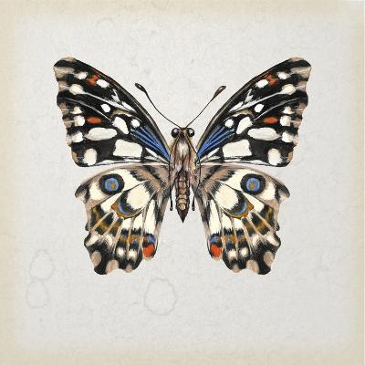 Butterfly Study II-Melissa Wang-Art Print