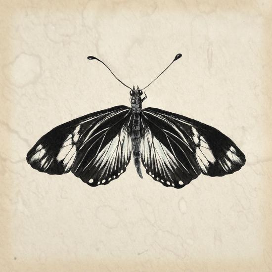 Butterfly Study VI-Melissa Wang-Art Print
