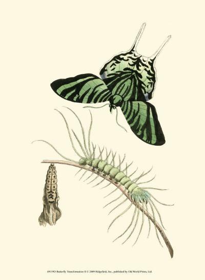 Butterfly Transformation II--Art Print