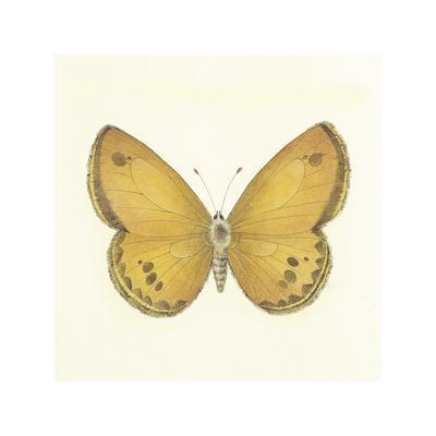 https://imgc.artprintimages.com/img/print/butterfly-v_u-l-f1le0x0.jpg?p=0