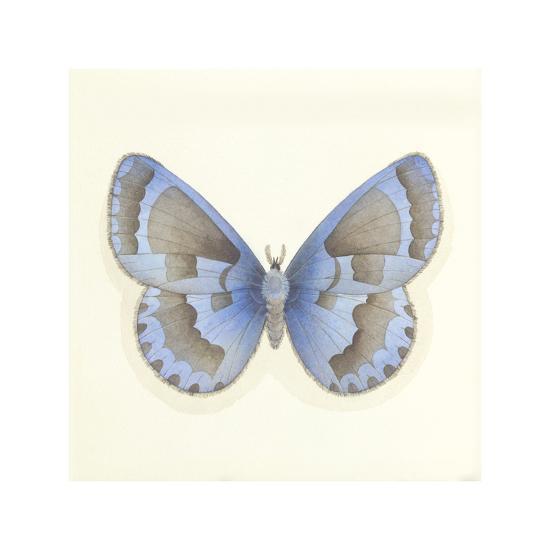 Butterfly VII-Sophie Golaz-Premium Giclee Print