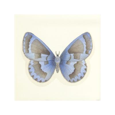 https://imgc.artprintimages.com/img/print/butterfly-vii_u-l-f1le0z0.jpg?p=0