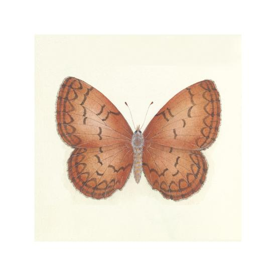 Butterfly VIII-Sophie Golaz-Premium Giclee Print