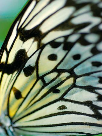 https://imgc.artprintimages.com/img/print/butterfly_u-l-f5jsbc0.jpg?p=0