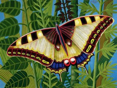 https://imgc.artprintimages.com/img/print/butterfly_u-l-pjc1gf0.jpg?p=0