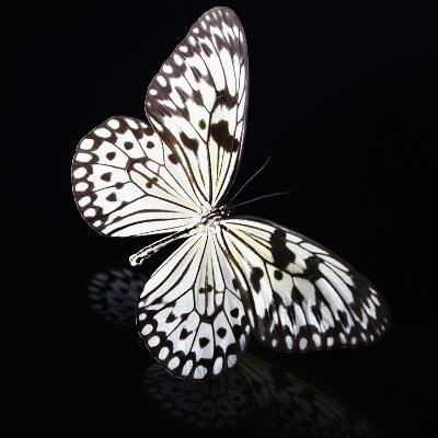 Butterfly-Sean Justice-Photographic Print