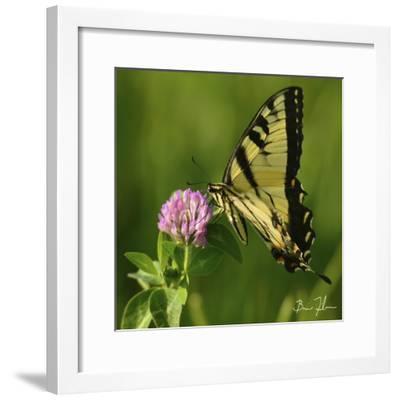 Butterfly-5fishcreative-Framed Giclee Print
