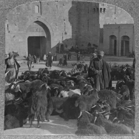 'Buying goats at the Damascus Gate, Jerusalem', c1900-Unknown-Photographic Print