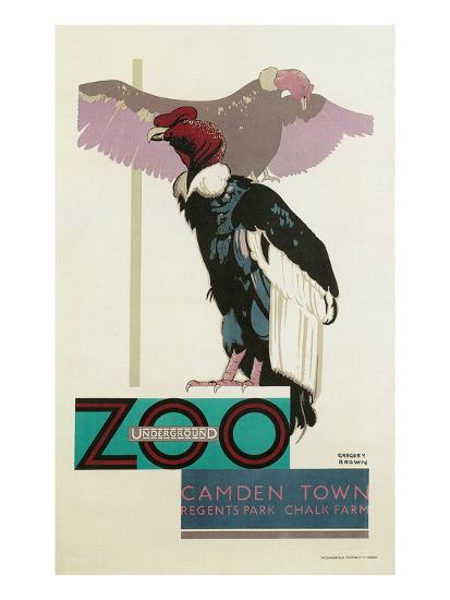Buzzards, London Zoo--Art Print