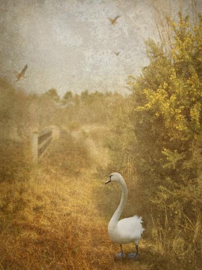 Buzzbird-Lynne Davies-Photographic Print