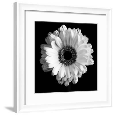 BW Flower on Black 01-Tom Quartermaine-Framed Giclee Print