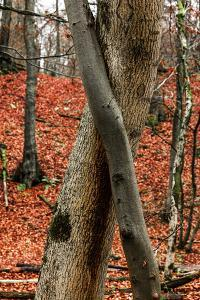 Autumnal foliage in the forest by By