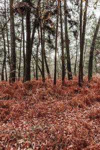 Fern in the autumn forest by By