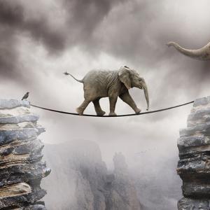 Baby Elephant by by Sigi Kolbe
